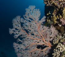There are so many different corals to see on our 17 exclusive dive sites