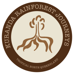 Kuranda Rainforest Buggy Experience
