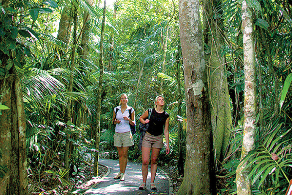 kuranda rainforest walks