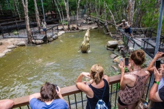 Port Douglas & Hartley's Croc Park | Full Day