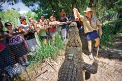 Half Day Hartley's Croc Park & Transfers | 1:15pm Departure