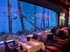 Cairns Aquarium & Lunch at Dundee's Restaurant