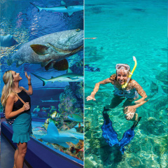 Cairns Aquarium & Outer Barrier Reef in a day.