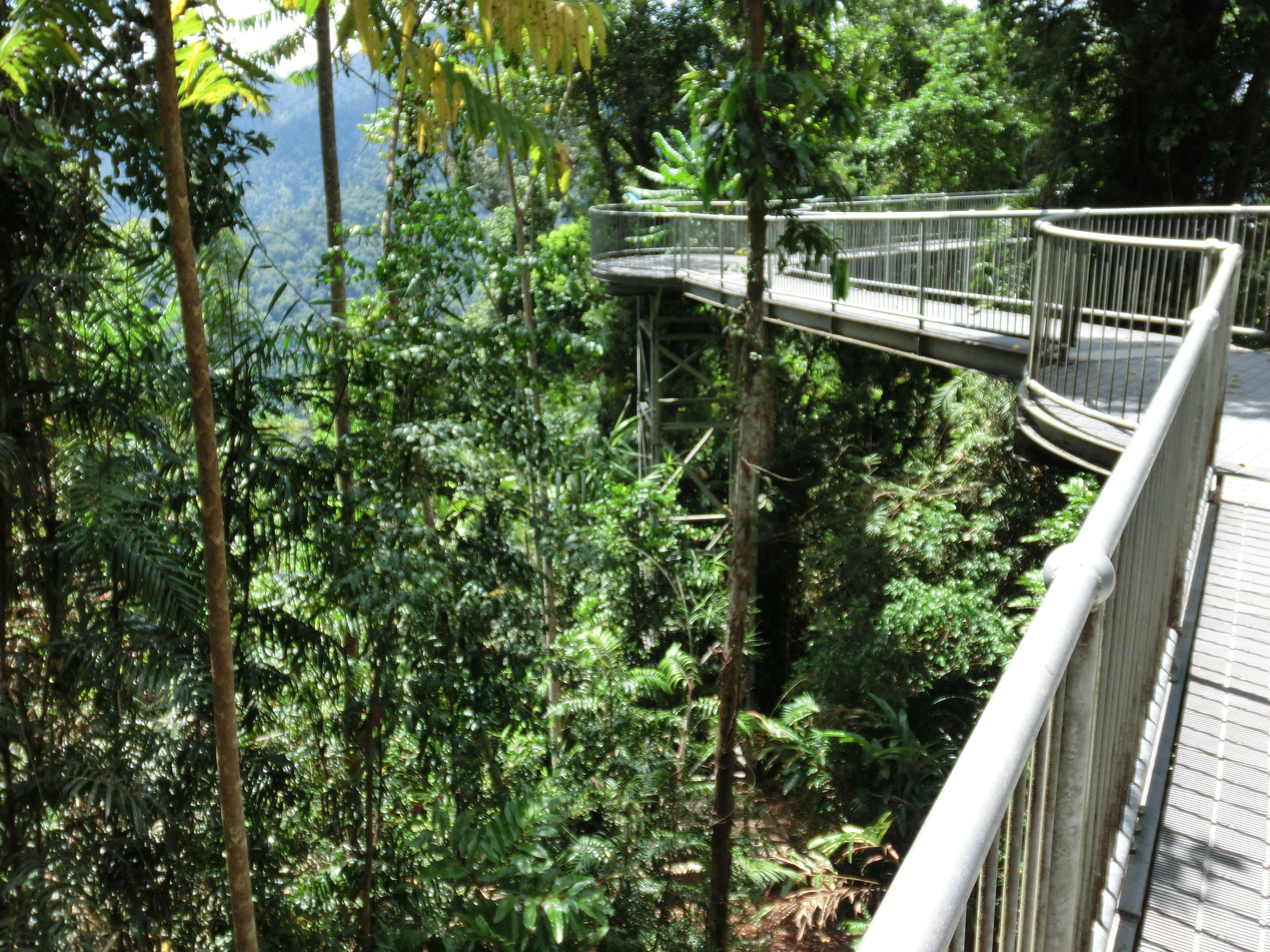 See All Photos ... & Paronella Park u0026 Mamu Tropical Skywalk Waterfalls Rainforest ...
