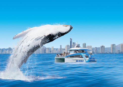 Gold Coast Whale Watching Cruise from Sea World (May - November)