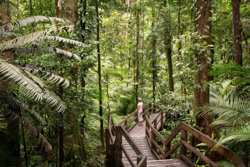 Plant Life in the Daintree Rainforest