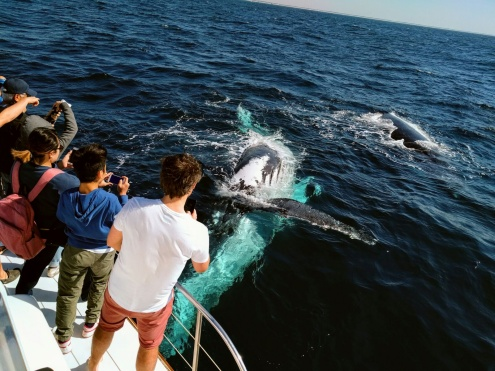 Whale Watching & Surfers Paradise Day Trip from Brisbane