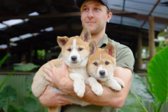 Rainforestation Welcomes Dingo Puppies!