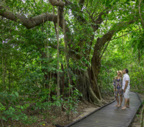 The Green Island Boardwalk is a leisurely 1.3km return taking less than an hour.